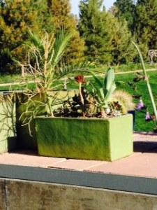 Denver Botanic Gardens - Succulent Garden