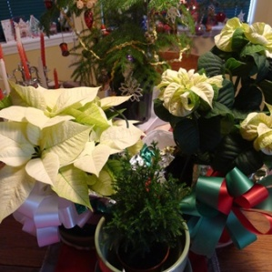 holiday plants