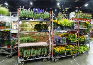 Racks (and racks) of plants wait for their cue. Sometimes plants fit perfectly into the design, other times last-minute changes need to be made to adapt to floppy flowers or clashing colors.