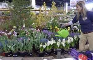 Plants have to be kept fresh, so there's no drooping before the show. Anne Beletic takes time to make sure the spring flowers have that just-bloomed look.