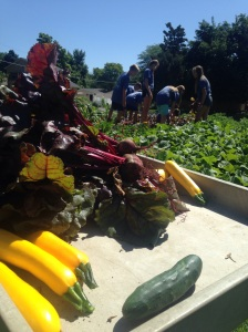 Harvest from Harvard Gulch Park vegetable garden