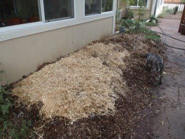Straw and partially decomposed garden waste