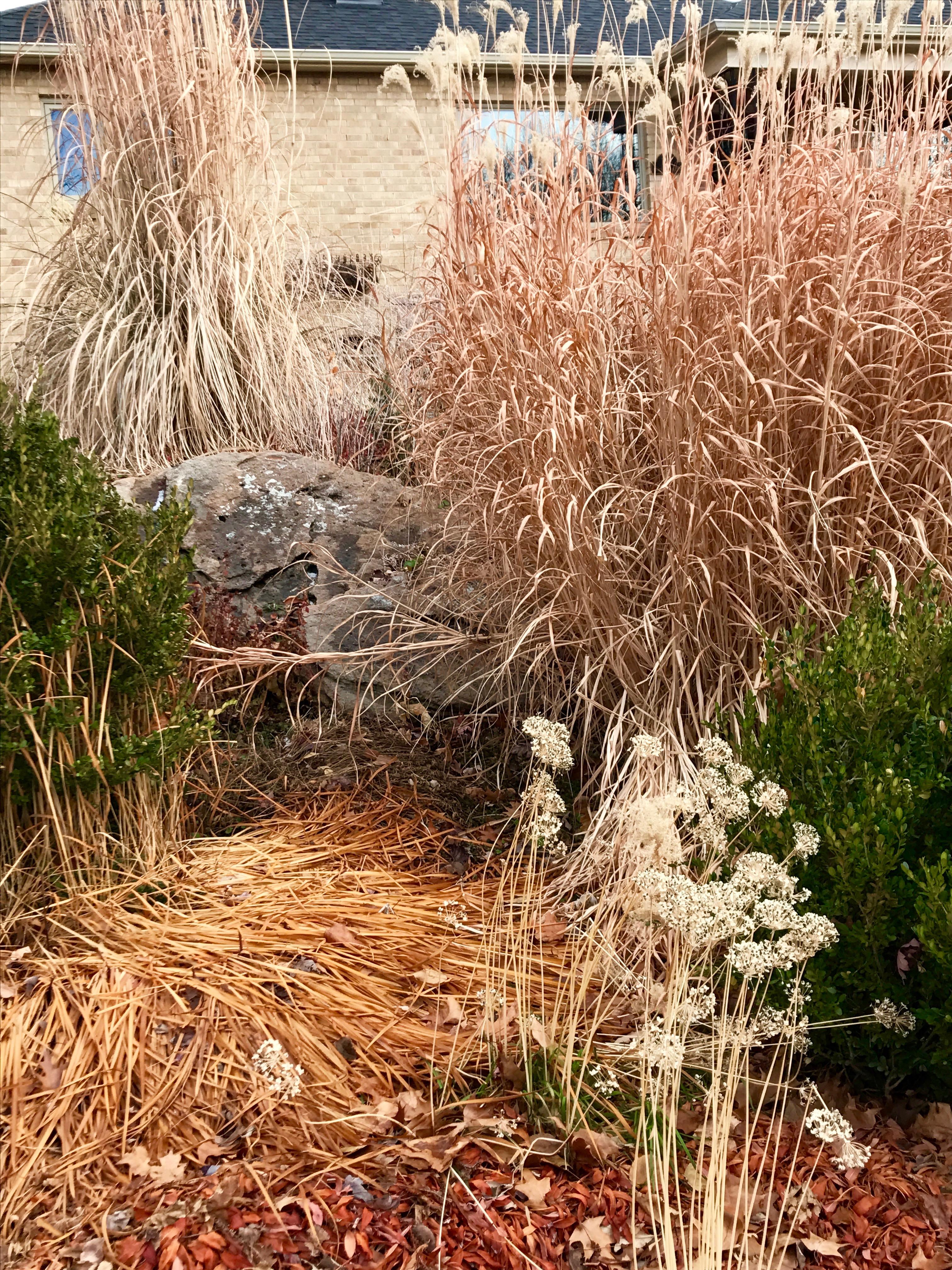 The joy of ornamental grasses denvergardeners for Different ornamental grasses