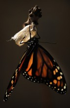 butterfly-1518060_1280 (7) - Copy