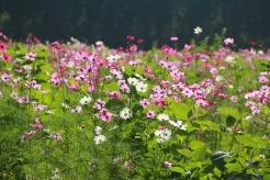 flower-garden-1486941_960_720