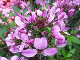 flower-garden-389321__340