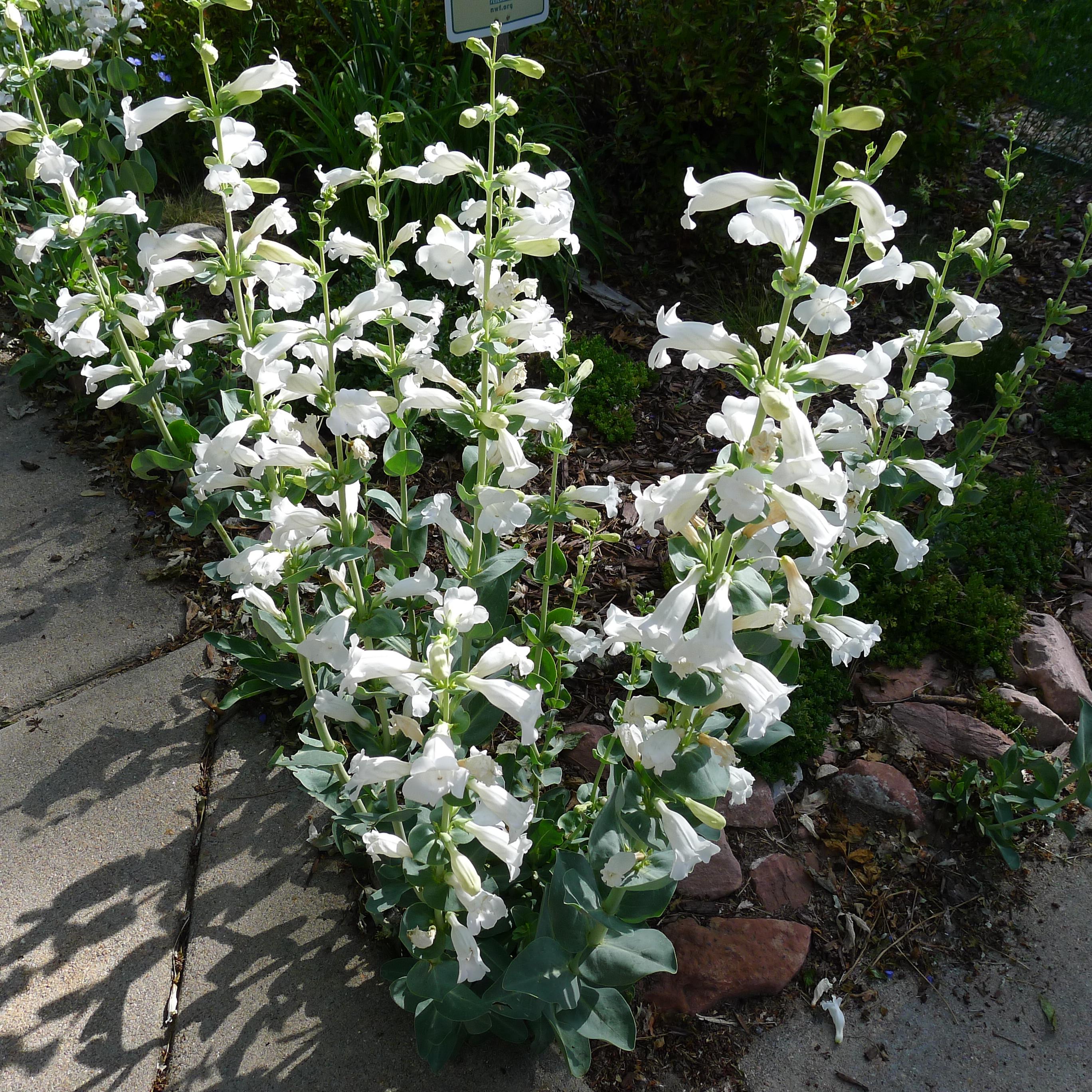 CSU Denver Extension Horticulture