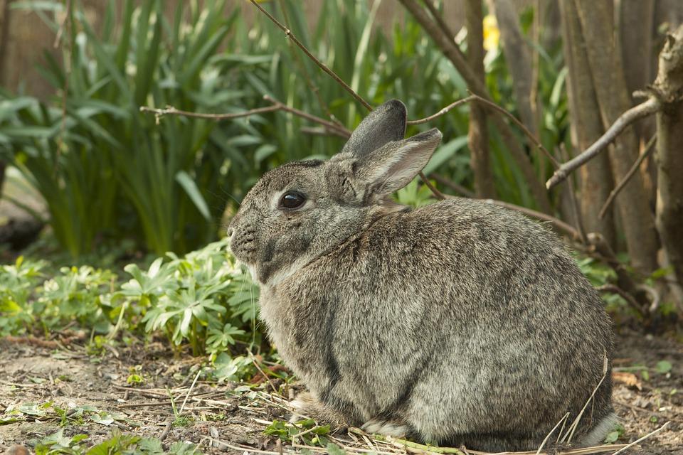 rabbit-717855_960_720