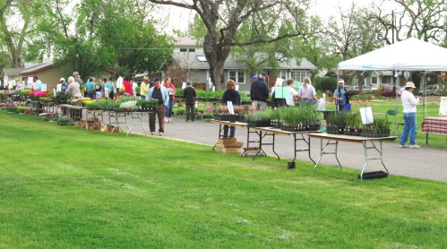 8th Annual CMG Plant Sale, Harvard Gulch Park, Denver CO 5-18-13 (6)